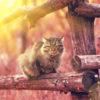 Cat sitting on a wooden fence at sunset