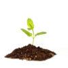 tiny-baby-plant-concept_f1vU_yFd