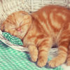 Little red kitten sleeps in a basket